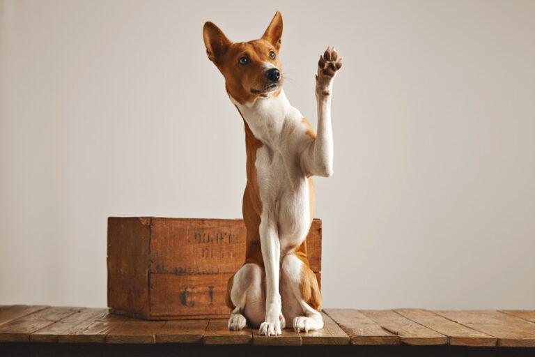Rally Trick-Dog